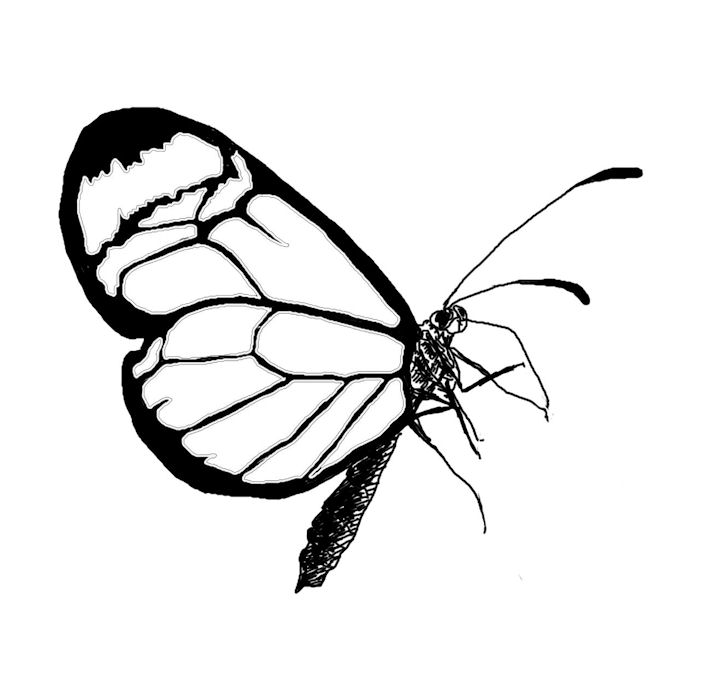 Butterfly Line Drawing Easy : Butterfly line art cliparts
