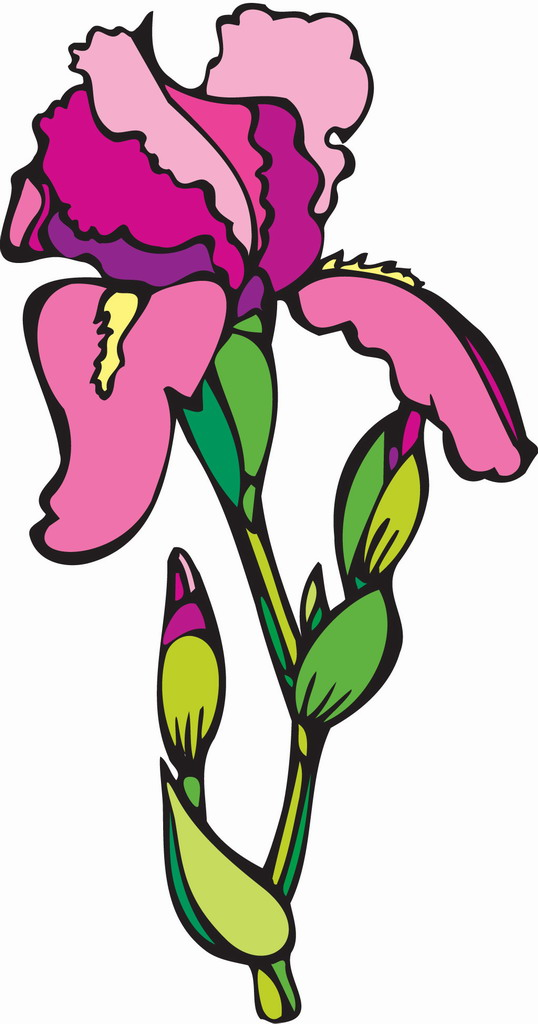 Cartoon carnation flower pictures | Trees and Flowers Pictures