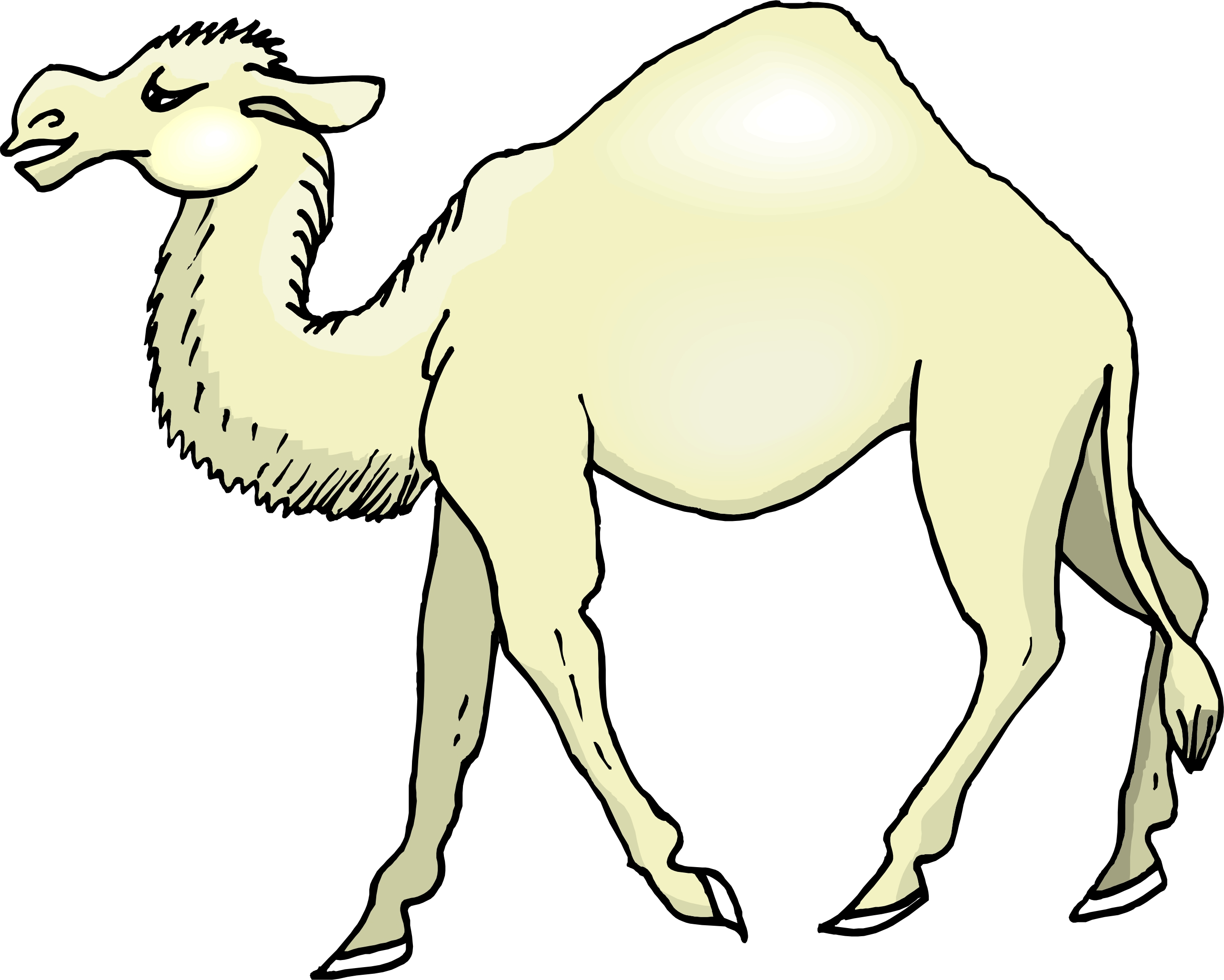 Cartoon pictures of camels