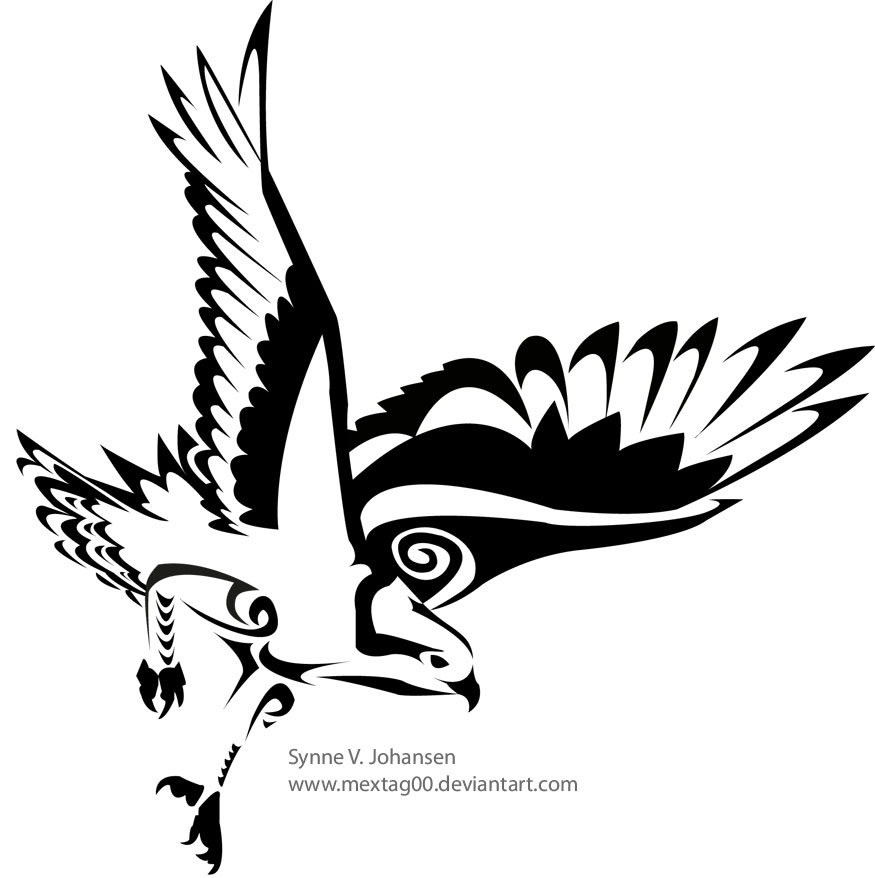 white hawk drawing wwwimgkidcom the image kid has it