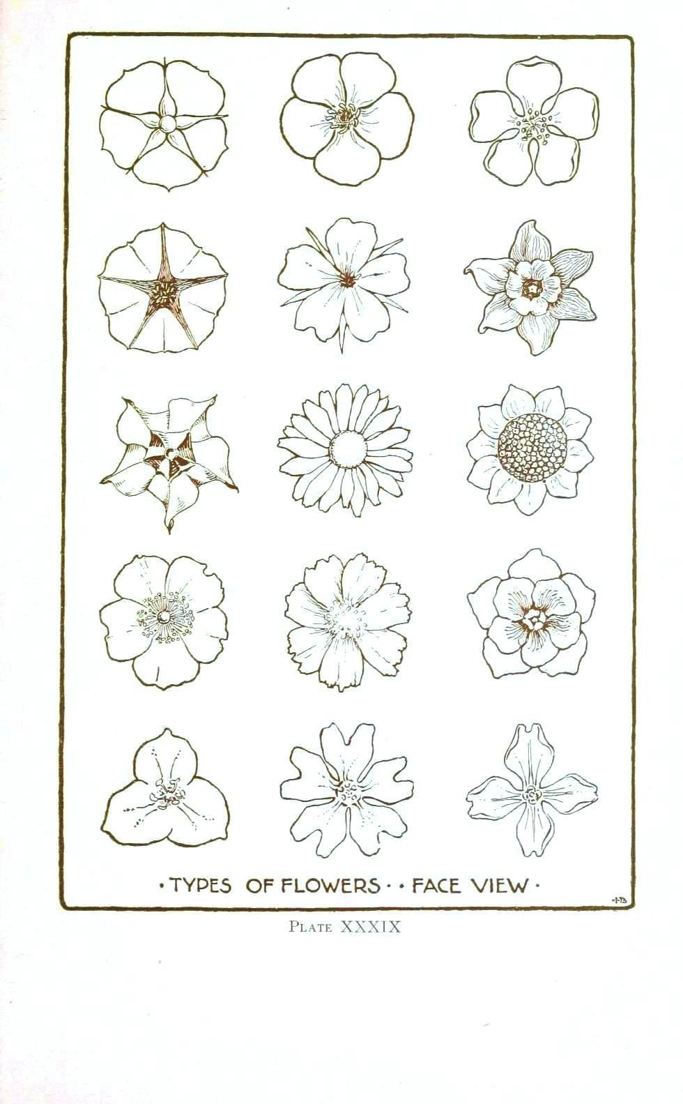 Botanical Flower Line Drawing : Flower line drawing cliparts