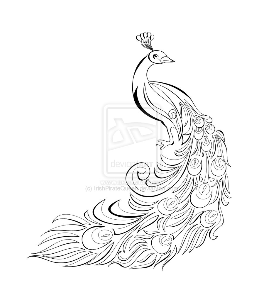 Line Drawing Peacock : Peacock drawing black and white cliparts