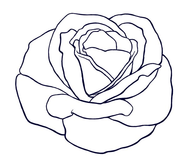 Line Drawing Of A Rose : Rose lineart cliparts