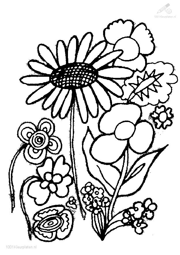 coloring pages of tomato plants - photo#21