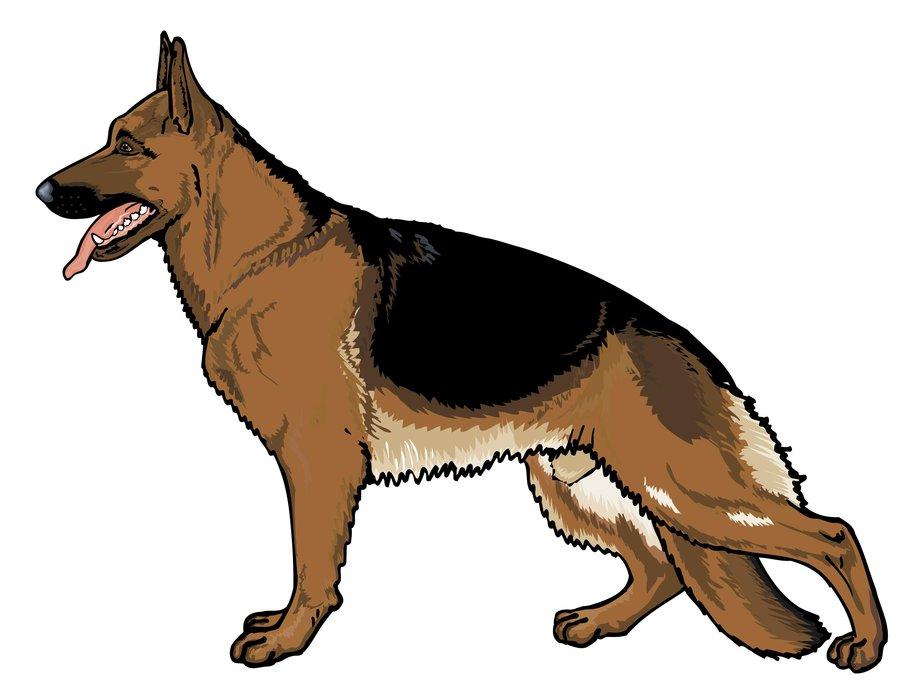 German Shepherd Clipart - Cliparts.co